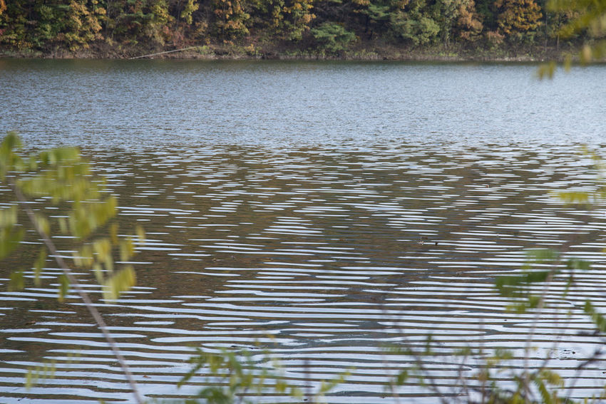 autumn landscape at Janggye Tourism Place in Okcheon, Chungbuk, South Korea Autumn Janggye Okcheon Riverside Beauty In Nature Day Lake Nature No People Outdoors Reflection Rippled River Scenics Tranquility Tree Water