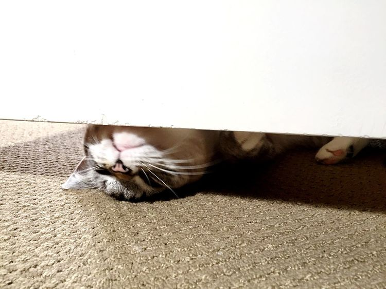 Behind The Door Domestic Cat Domestic Animals Pets Feline Mammal One Animal Animal Themes Cat Whisker Lying Down Indoors  Cats Cat♡ Cats Of EyeEm Cat Lovers Animal Body Part