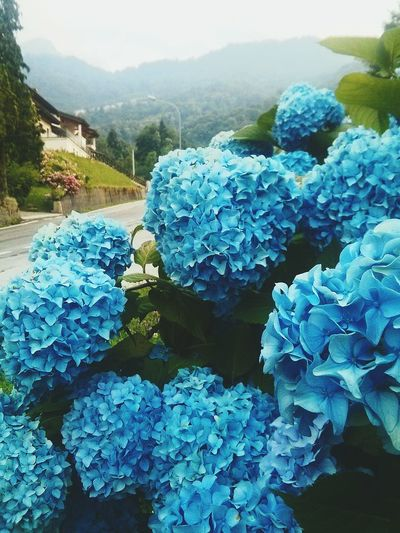 Color Palette Blue Ortensia Mountains Mountain Flowers Flowers Summer2016 Recoaro