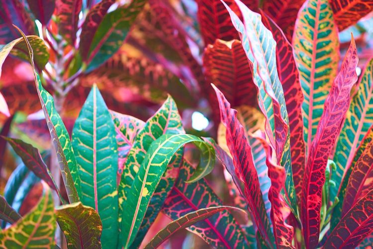 Colors in the garden. Colors Garden Nature Plants Nature_collection
