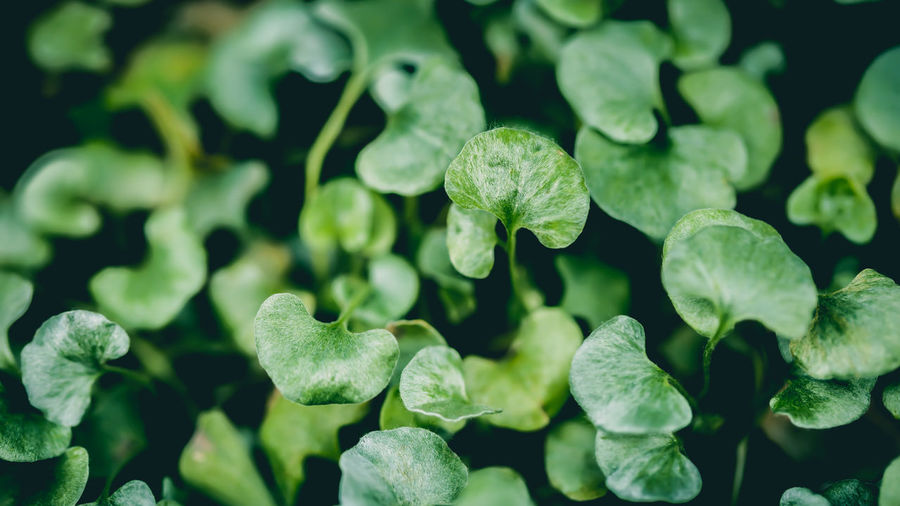 Can you feel the Green? Beauty In Nature Close-up Day Freshness Green Color Growth Horizontal Leaf Nature No People Outdoors Plant Maximum Closeness