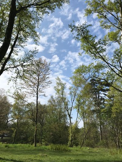 🌳 Tree Nature Sky Forest Day Beauty In Nature No People Low Angle View Green Color Cloud - Sky Springtime Freshness Nature No Filter, No Edit, Just Photography