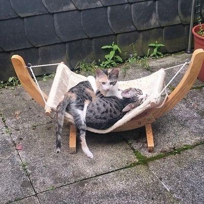 Meine Oma hatte mir in April diese Katzenhängematte geschenkt und war ganz enttäuscht, dass Wassi und Tshaga sie nicht benutzen wollten. Jetzt haben Feli und Echo sie eingeweiht. Hab Oma schon Fotos geschickt 😉 Felicidad_the_cat Echo_the_cat