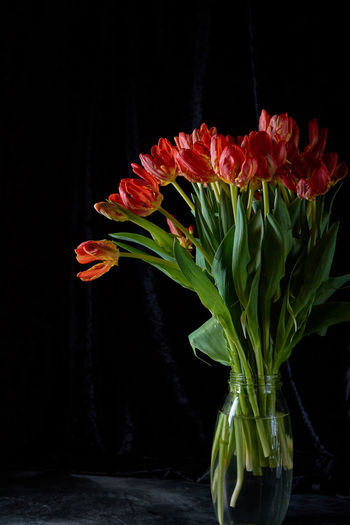Tulips Beauty In Nature Black Background Bouquet Bunch Of Flowers Close-up Flower Flower Arrangement Flower Head Flowering Plant Fragility Freshness Indoors  Inflorescence Nature No People Petal Plant Plant Part Red Studio Shot Vase Vulnerability
