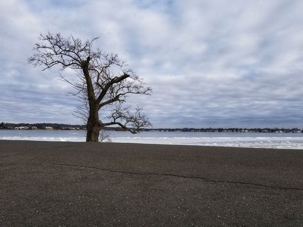 My favorite tree! Frozen Water Beach Sea Landscape Cloud - Sky Tranquility Tree Sky Scenics Beauty In Nature Outdoors Nature Tranquil Scene Water Bare Tree Day No People Horizon Over Water