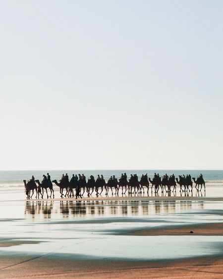 People riding on camels at beach against clear sky