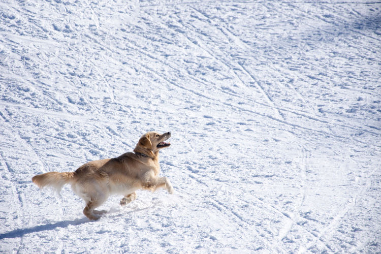 Dog running on snow covered landscape