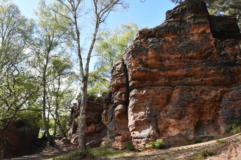 Rock Formation Tree Nature Beauty In Nature Outdoors Tranquility Landscape Eifel Germany Landlife Idyllic Lost In The Landscape