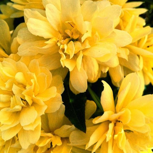 Paint The Town Yellow Beauty In Nature Blooming Close-up Flower Fragility Nature No People Outdoors Plant