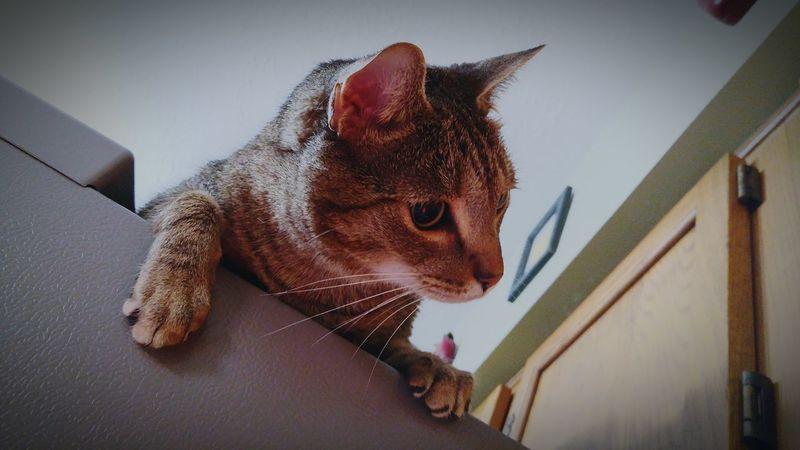 Pets Bloomfield Kentucky  Cat♡