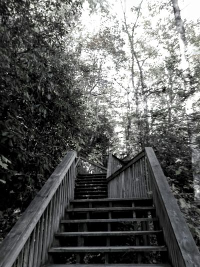 Best Of Stairways Stairways Stairs_collection Taking Photos Check This Out My Point Of View Black & White Outdoor Photography The Great Outdoors EyeEm Nature Lover Going Up Showcase: November