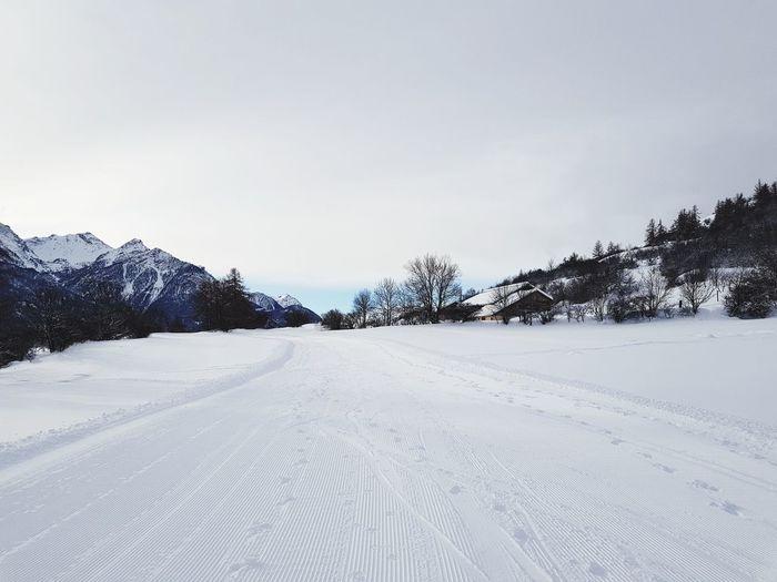 snowy mountain. Pinaceae Pine Tree Beach Deep Snow Snowing Ski Track Snowcapped Mountain Powder Snow Skiing