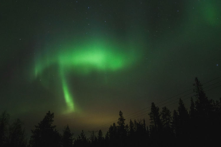Scenics - Nature Green Color Low Angle View Astronomy Space Beauty In Nature Night Tree Plant No People Aurora Polaris Power In Nature Coniferous Tree Non-urban Scene Tranquil Scene Nature Idyllic Silhouette Growth Tranquility Sky Star - Space EyeEm Nature Lover