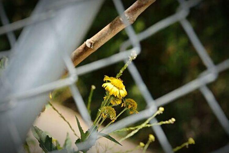 Learn & Shoot: Layering Nikon D3200 Urban Exploration Natureporn StillLifePhotography EyeEm Best Shots Nature Photography EE_Daily: Yellow Wednesday EyeEm Best Shots - Flowers Urban Gardening