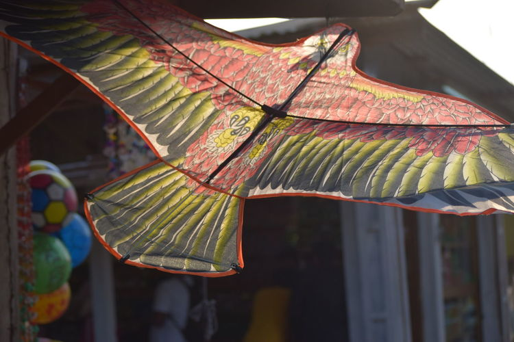 Guddi Leaf Close-up Fall Sunshade The Art Of Street Photography My Best Photo