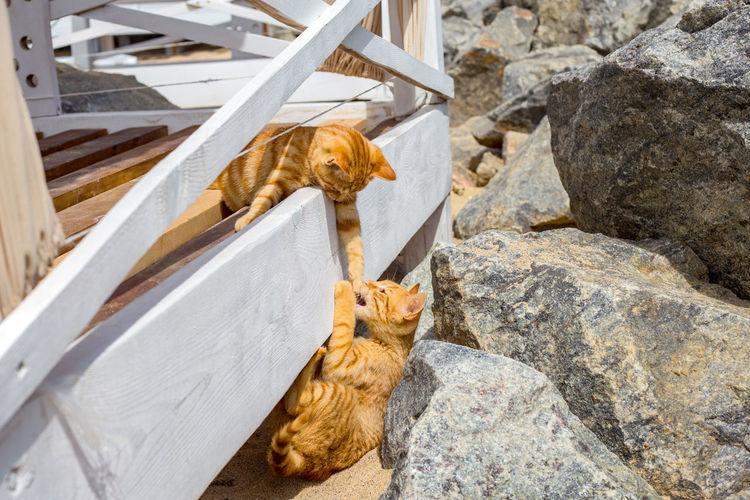 Cat sitting on rock