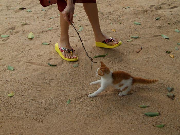 Kitten Cat People Outdoors One Animal Kosamui Thailand Thailand Trip Travel