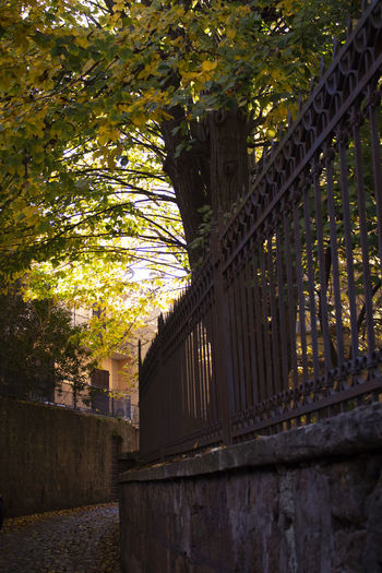 No People Sunlight Branch Fence Outdoors Architecture Tree Hiddenpath Nature