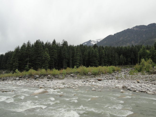 Himalayas ecology.. Himalayas Mountain River Vyas Manali Riverscape Nature Pine Woodland Evergreen Tree Hot Spring Geology Countryside Rocky Mountains Spruce Tree Physical Geography