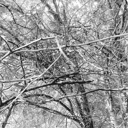Tree Nature Growth Low Angle View Forest Day Full Frame Outdoors Beauty In Nature Branch No People Backgrounds Close-up Sky Perspectives On Nature Black And White Friday AI Now