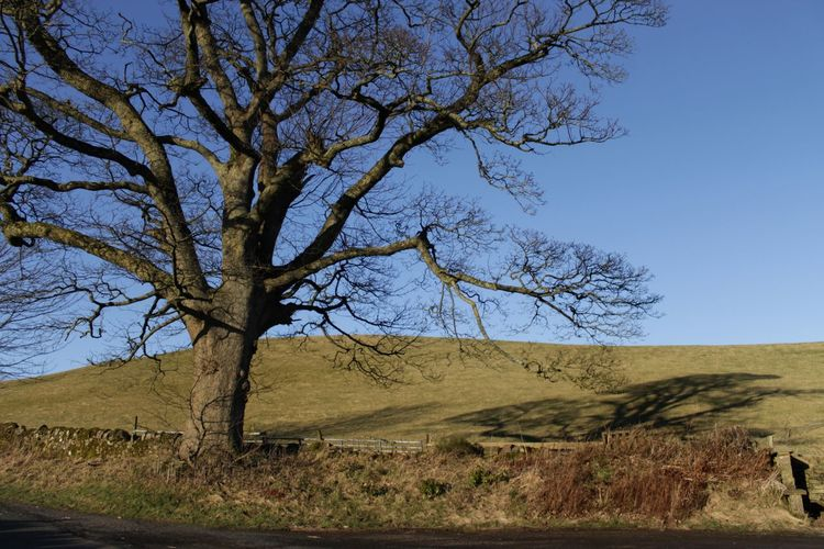 Bare Tree Beauty In Nature Blue Branch Clear Sky Day Landscape Lone Nature No People Outdoors Scenics Sky Tranquility Tree Tree Trunk