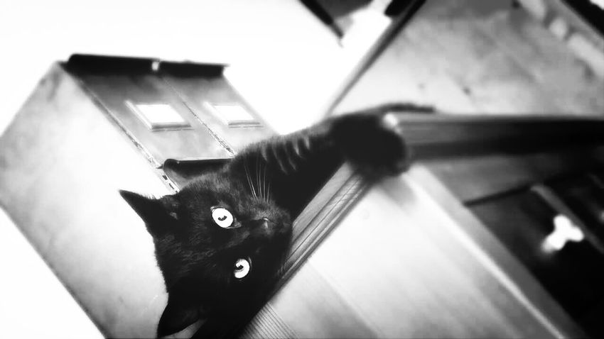 Cat BLackCat Love Mono Photo