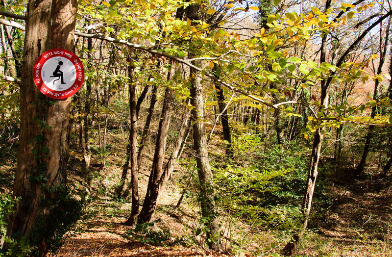 Funny Branch Communication Day Forest Guidance Interdiction Land Nature No People Odd Outdoors Plant Prohibition Prohibition Sign Road Sign Sign Singular Tranquility Tree Tree Trunk Trunk Uncommon  Warning Sign WoodLand