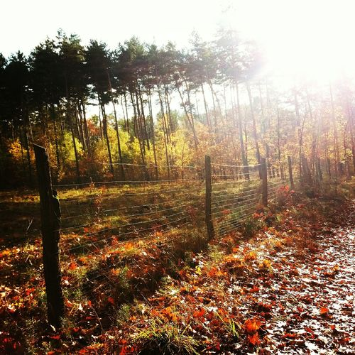 Nature Landscape Autumn Beauty In Nature Polishautumn Tree Nature Beauty In Nature No People Sunset Day Sky Outdoors