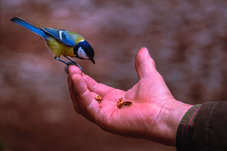 Close-Up Of Bird On Hand
