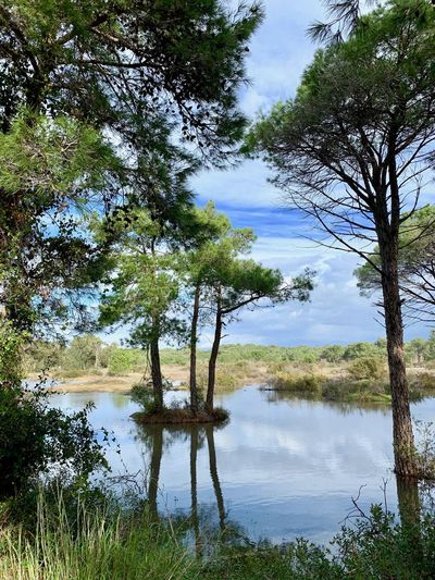 Side Manavgat Turkey Sidewalk Tree Plant Tranquility Growth Nature Beauty In Nature Tranquil Scene Land Day No People Scenics - Nature Non-urban Scene Outdoors Forest Lake Water Reflection Idyllic Pine Tree Pine Woodland Pine