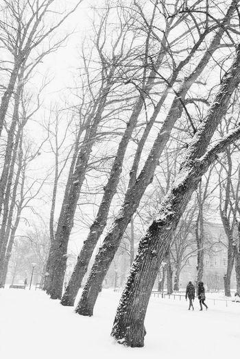 Winter Winter Snow Cold Temperature Tree Bare Tree Nature Weather