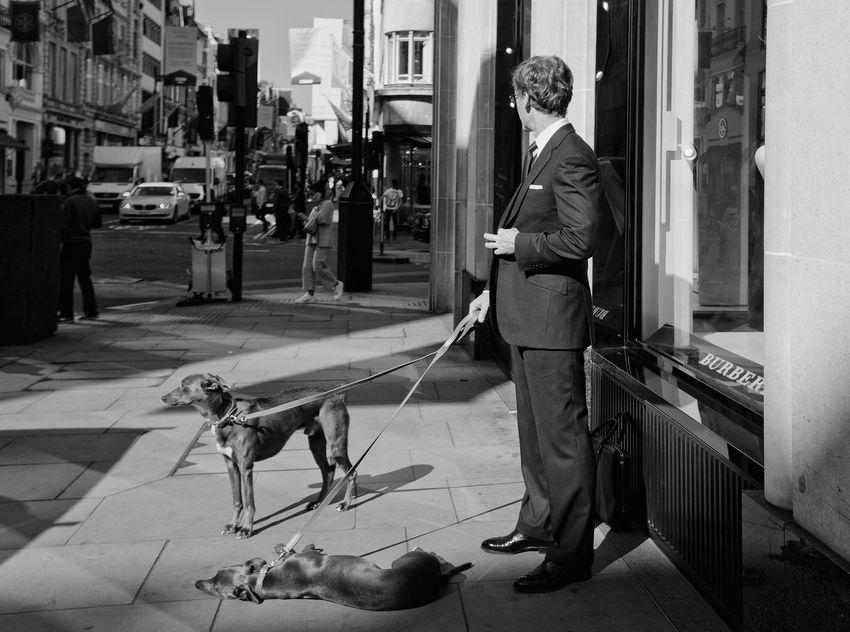 The wait Day Dog Domestic Animals London Mayfair People Posh The Street Photographer - 2017 EyeEm Awards