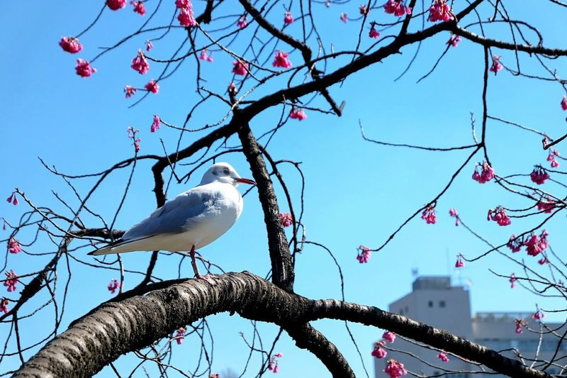 Bird Tree Outdoors Animal Wildlife Pet Photography  Pet Portraits Tokyo Spring Nature Sky Branch Perching No People Animals In The Wild Day Animal Themes Beauty In Nature The Week On EyeEm EyeEmNewHere
