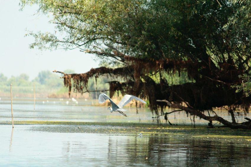 Donaudelta EyeEm Nature Lover Catching A Flight Catcher Animals Wildlife Flight
