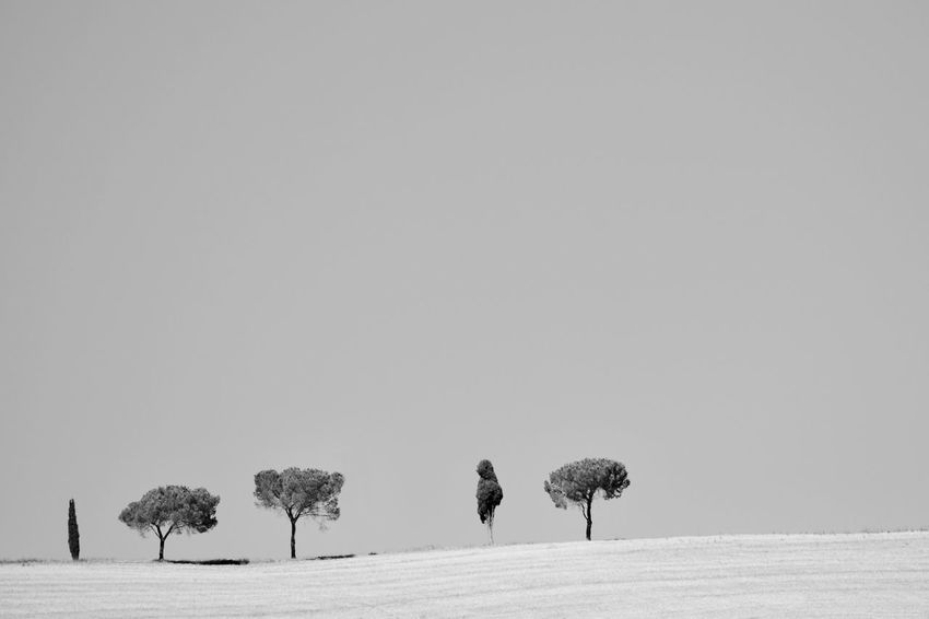 Trees | 5, 2016 Beauty In Nature Black And White Clear Sky Day Emptiness Italy Landscape Loneliness Minimal Minimalism Nature No People Outdoors Siena Sky Travel Tree