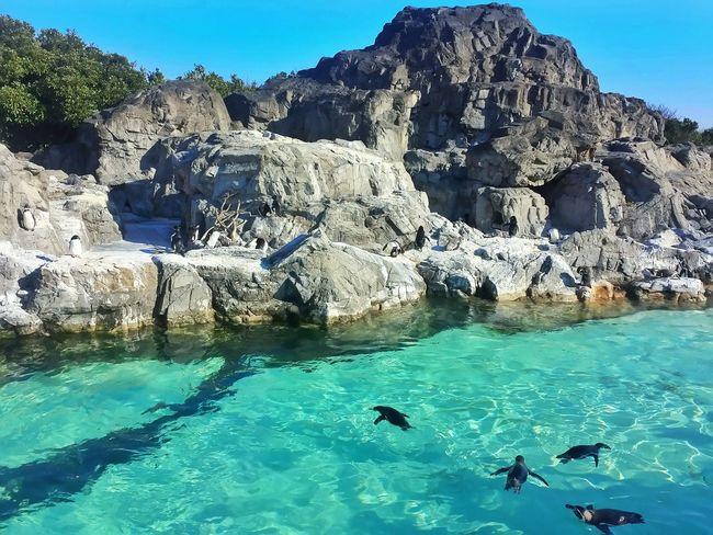 peng-wings!!! 🐧🐧🐧🐧🐧    Animals Penguins Sea Life