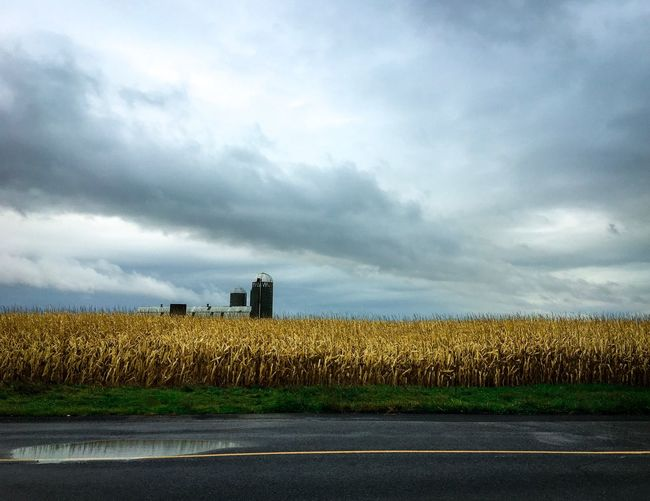 UnEasy Peaceful Harvest Fall Storm Cloud Cloudscape Ominous Sky Silo Farm Farm Life Wheat Field Corn Field Hardwork Sky Cloud - Sky Field Agriculture No People Day Landscape Road Scenics Nature Growth Outdoors Grass Beauty In Nature