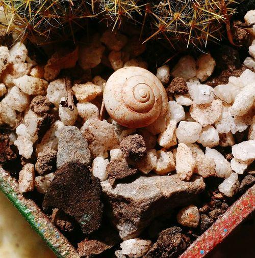 Espiral Fractal Cactus Caracol Plant Pedras