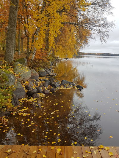 View of autumnal trees by lake