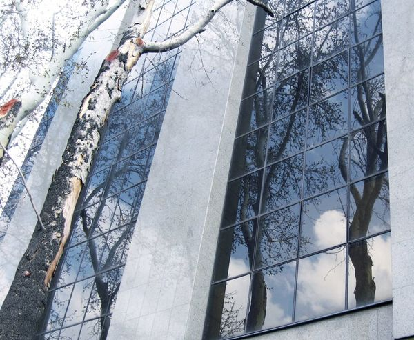 Reflection,Tehran,Iran Reflection Reflection In The Glass  Tree Reflection  Tree Silhouette Reflections Reflection_collection  Streetphotography Street Photography Reflection On Building Battle Of The Cities Tehran Tehran, Iran Valiasr Street