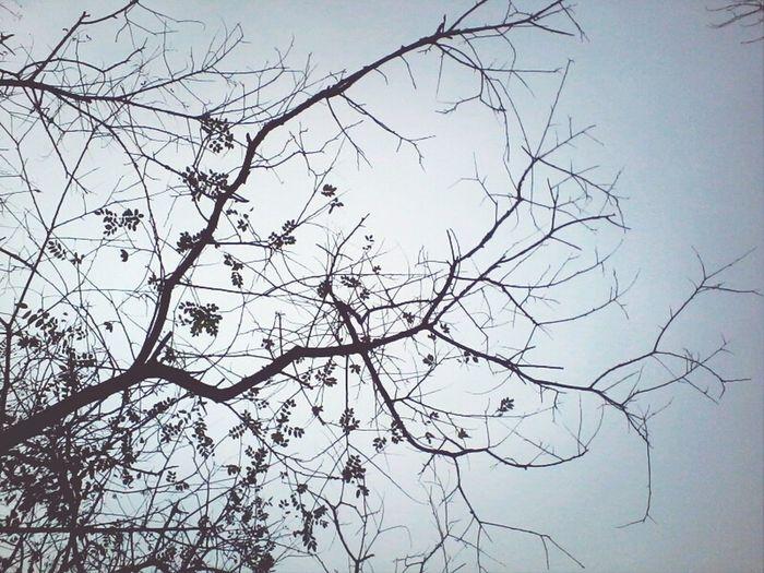 the sky above us. Trees Theskyaboveus Sky