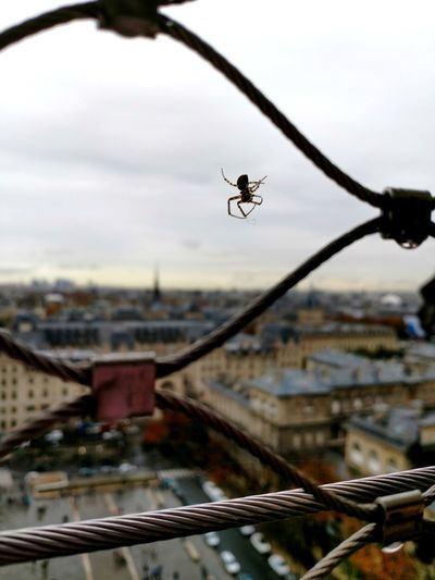 Spider Eiffel Tower City View  Cityscape Fence Sky Close-up Animal Themes Urban Scene Skyline Arachnid Arthropod Crowded Animal Leg Spread Wings
