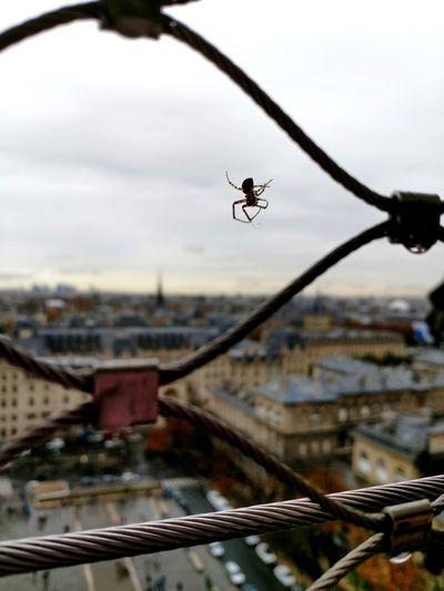 Spider Eiffel