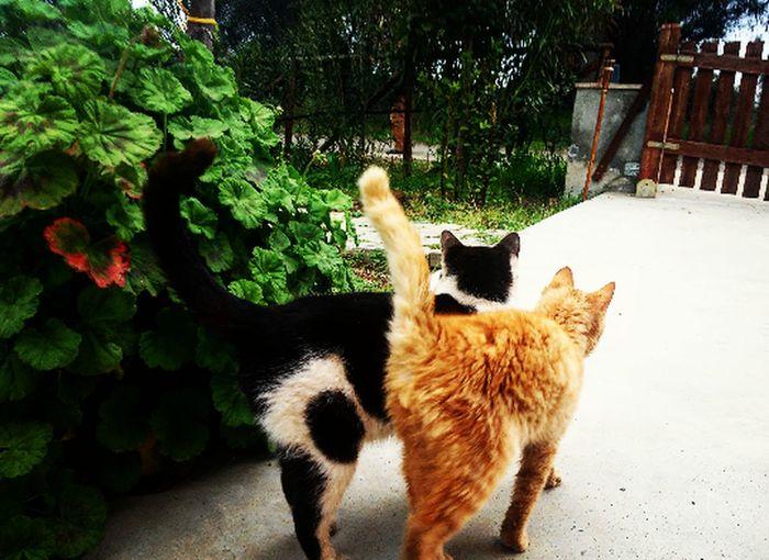 Cat Cat Lovers Photo Love Love Nature Sun Nature_collection Photography Springtime Feline Pets Garden Photography