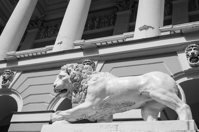 ~ II ✴ ~ Sculpture Statue Architecture No People Representing Outdoors Day Shadows & Lights Black & White Light And Shadow Monochrome Getting Inspired Canonphotography Stone Material Built Structure Building Exterior Blackandwhite Art And Culture Art And Craft Lion Column Spb Saint Petersburg Historical Building History