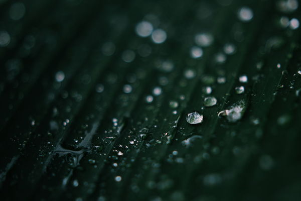 Canon Canonasia Canonphotography Canon_official Natgeo Nature Nature_collection Nature Photography Naturelovers Green Waterdroplets Raindrops EyeEm Malaysia Tpppfeature VSCO عرفانphoto