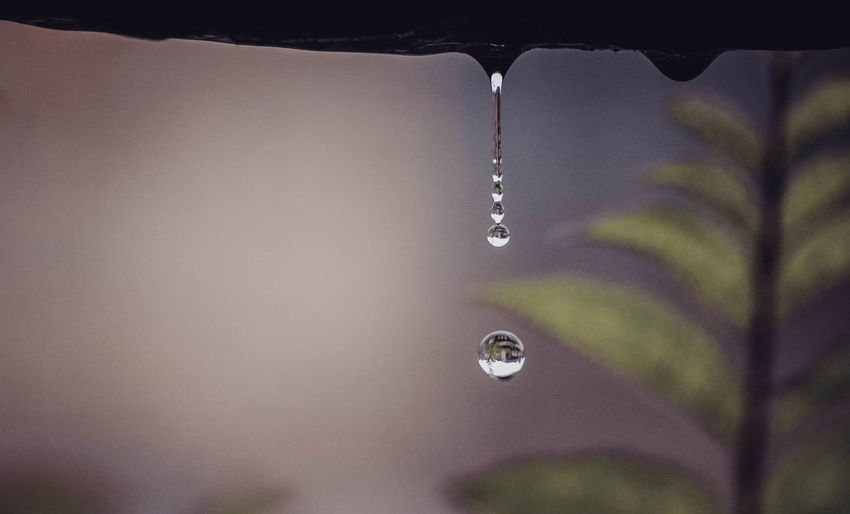 Close-up of water drop falling from leaf