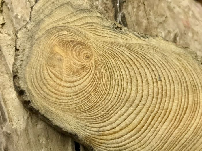 Wood - Material Tree Tree Ring Log Wood Grain Close-up Industry Timber Nature Tree Trunk Backgrounds Tree Stump Textured  Lumber Industry Concentric No People Cross Section Outdoors Day