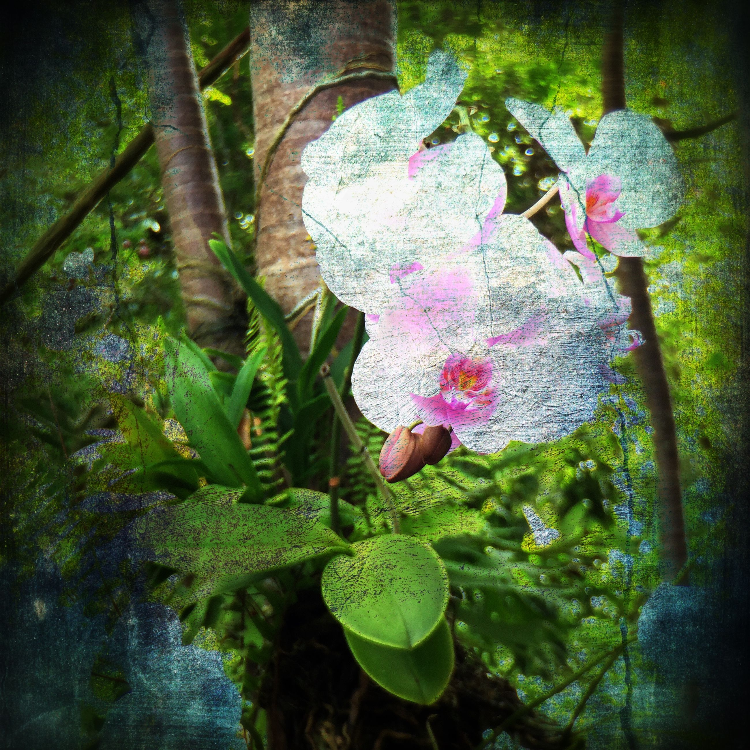 growth, leaf, plant, nature, beauty in nature, flower, green color, pink color, tranquility, freshness, growing, tree, day, high angle view, outdoors, tree trunk, close-up, fragility, no people, sunlight