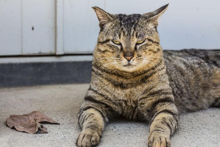 Live For The Story EyeEm Yamanashi,japan EyeEm Place Of Heart 山梨県 猫 Cat Pet Portraits The Week On EyeEm EyeEmNewHere